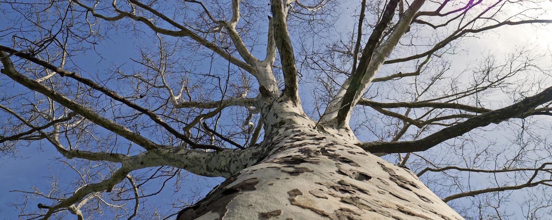 Ein Baum (Symbolbild) - SNA, 1920, 24.02.2021