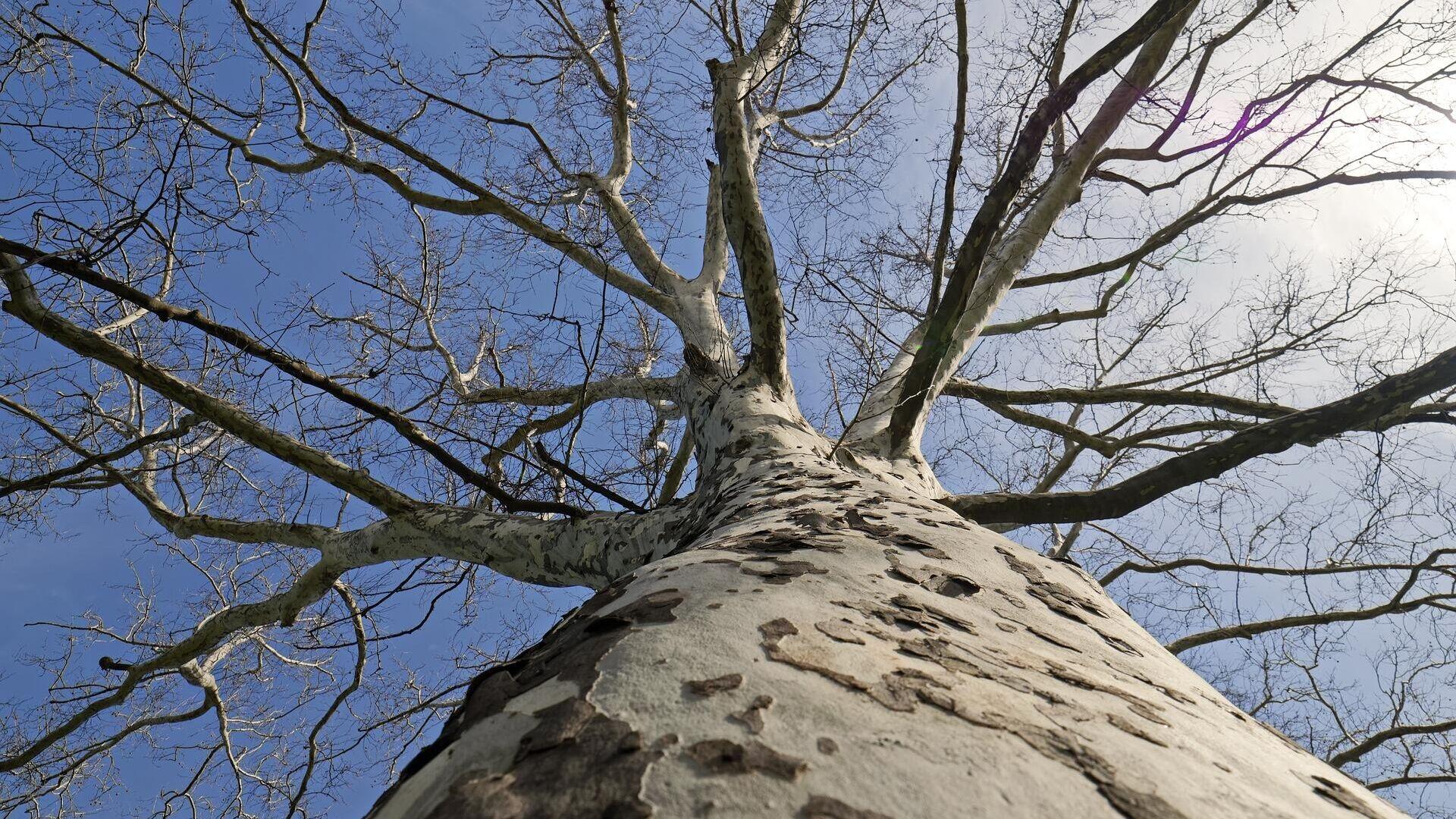 Ein Baum (Symbolbild) - SNA, 1920, 01.09.2021