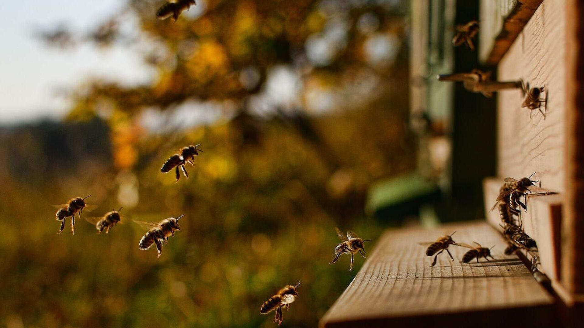 Honigbienen (Symbolbild)  - SNA, 1920, 05.08.2021