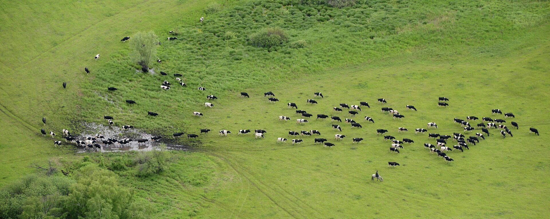 Luftfoto von einem Herd von Kühen - SNA, 1920, 31.12.2020