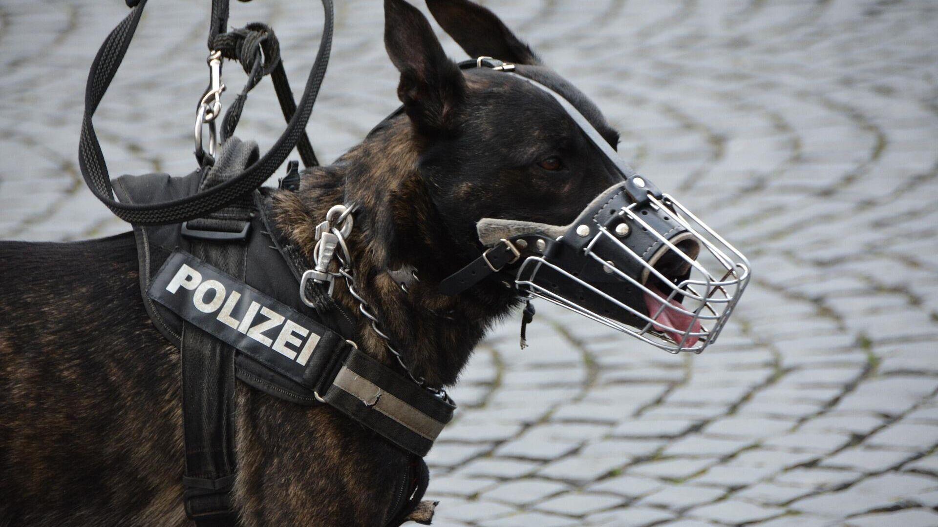 Polizeihund (Symbolbild)  - SNA, 1920, 26.01.2021