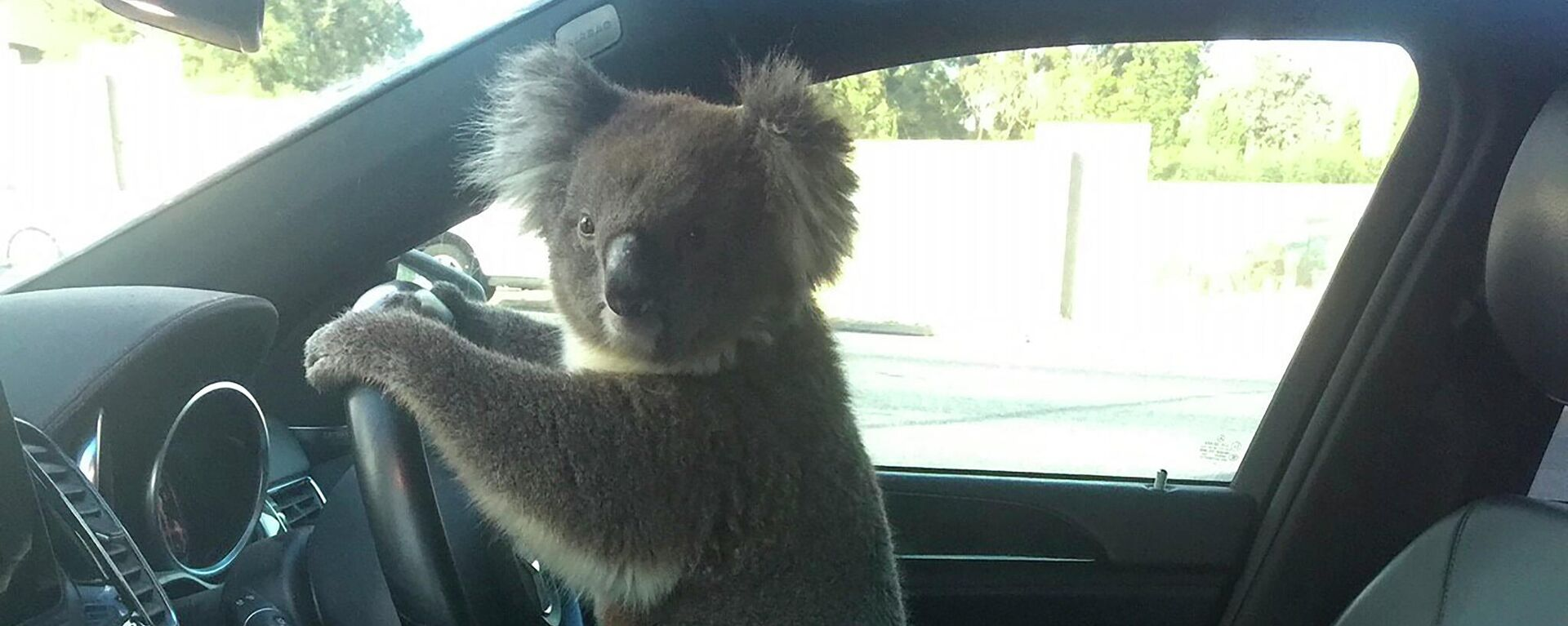 Koala am Steuer - SNA, 1920, 09.02.2021