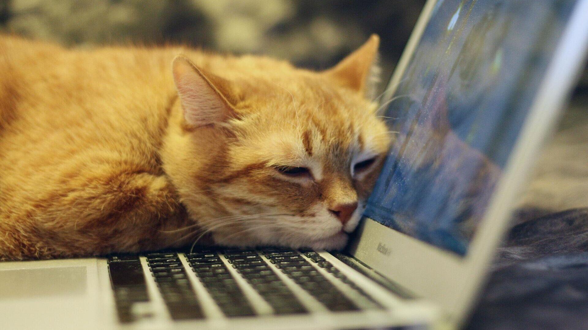 Katze am Laptop (Symbolbild) - SNA, 1920, 26.02.2021