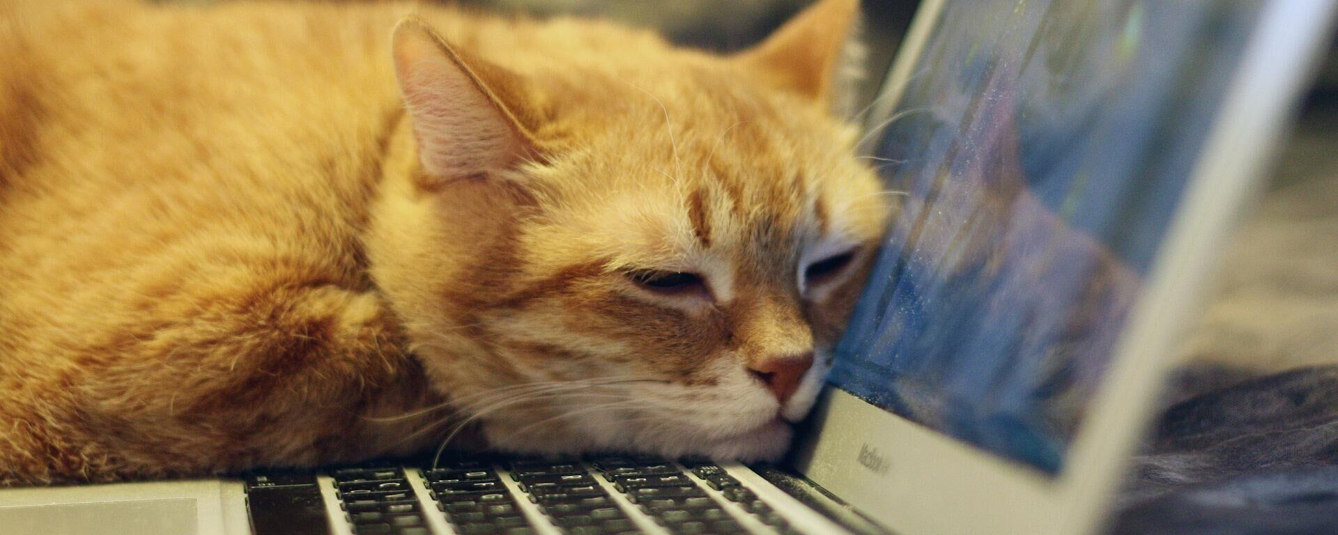 Katze am Laptop (Symbolbild) - SNA, 1920, 10.02.2021