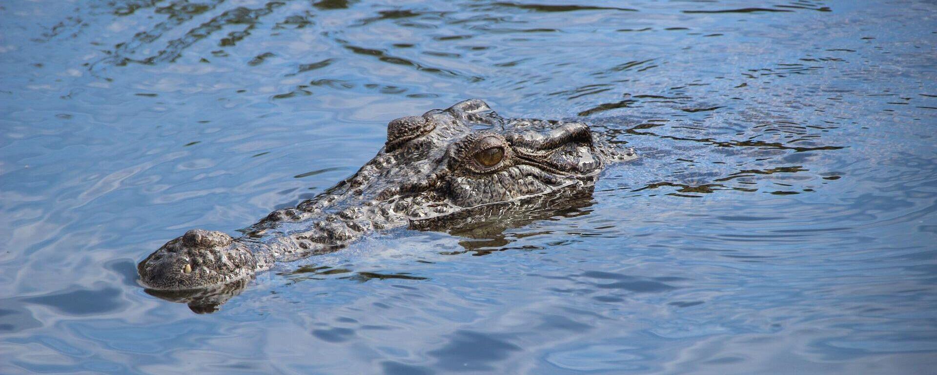 Krokodil (Symbolbild) - SNA, 1920, 05.04.2021