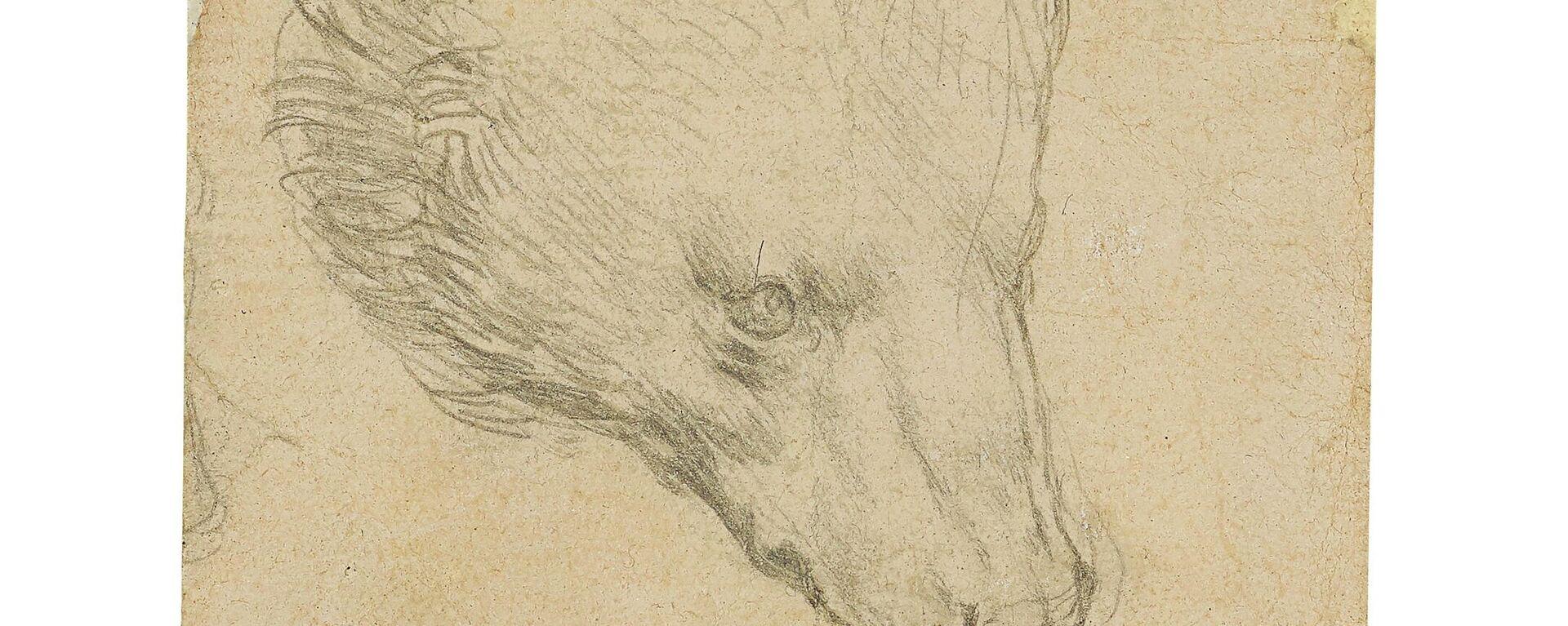 """Zeichnung """"Kopf eines Bären"""" von Leonardo da Vinci  - SNA, 1920, 08.05.2021"""