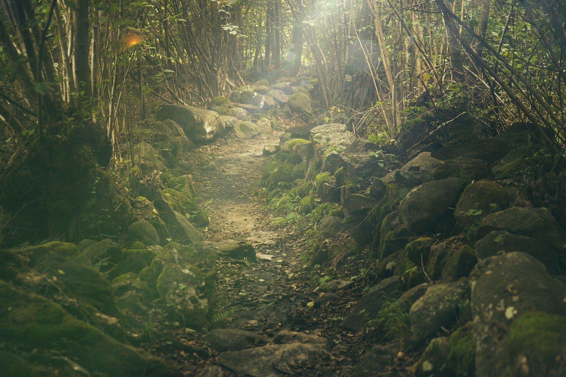 Wald (Symbolbild) - SNA, 1920, 10.09.2021