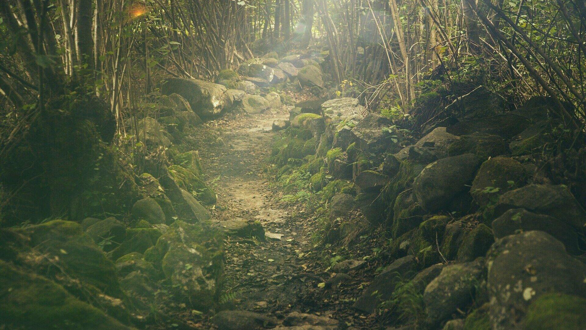 Wald (Symbolbild) - SNA, 1920, 16.09.2021