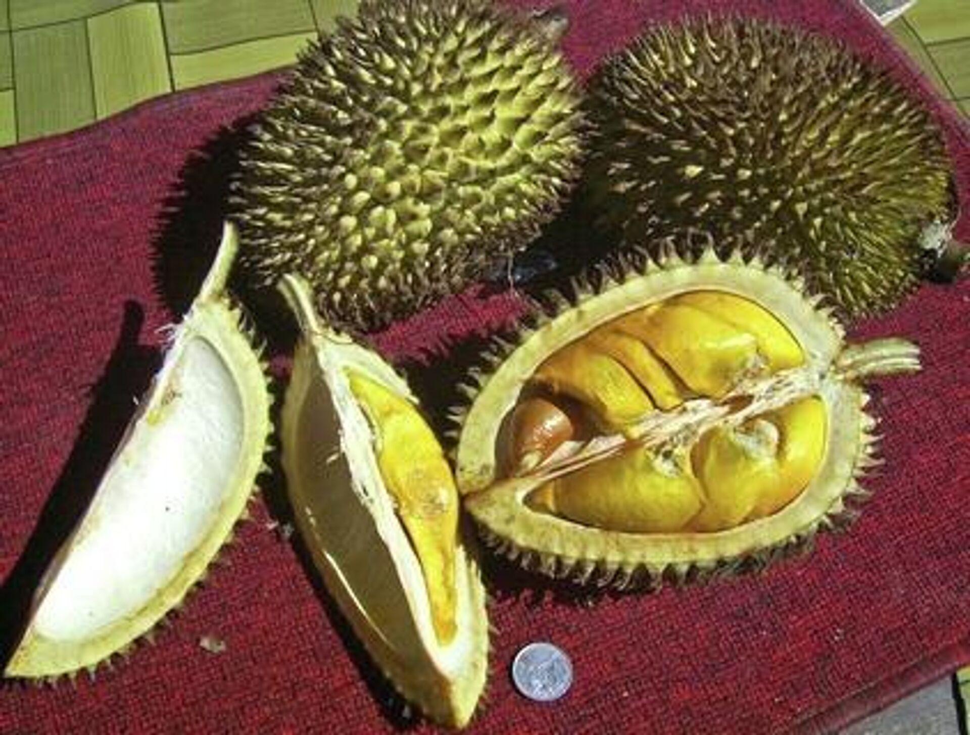 Durian - SNA, 1920, 01.07.2021