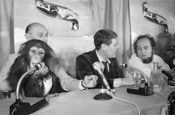 """Der italienische Schauspieler Marcello Mastroianni und Regisseur Marco Ferreri während der Pressekonferenz mit dem 14 Monate alten Affen """"Bella"""" bei den 31. Filmfestspielen in Cannes, 1978. - SNA"""