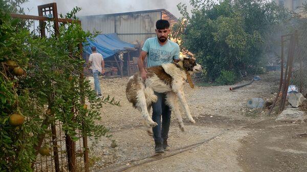 Спасение собаки во время природных пожаров в Турции - SNA
