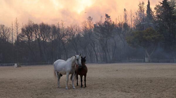 Лошади на ферме во время природных пожаров в северном пригороде Афин  - SNA