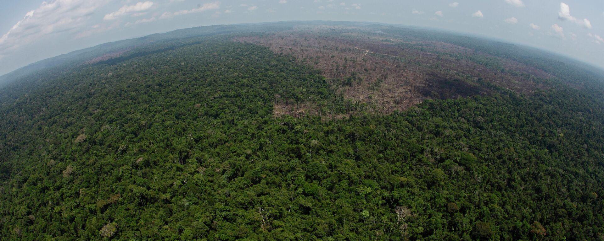Amazonas-Regenwald - SNA, 1920, 06.08.2021