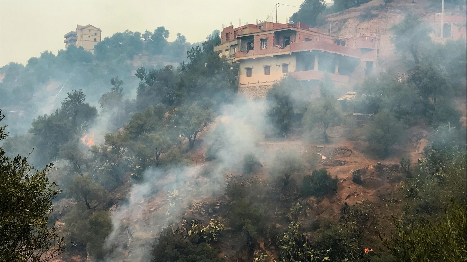 Waldbrände in Algerien - SNA, 1920, 11.08.2021