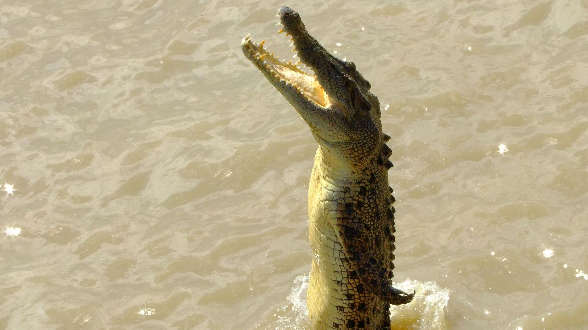 Besucher reißt Alligator dessen Maul auf und rettet Tierpflegerin - SNA, 1920, 04.10.2021