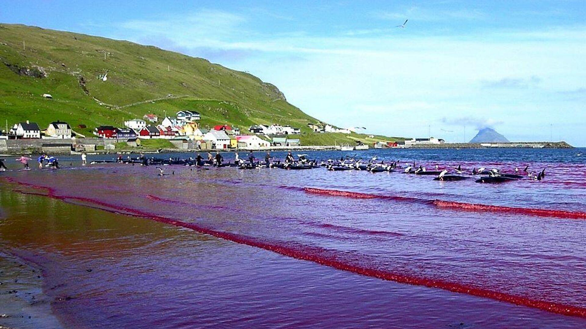 Färöer-Inseln während der Delfinjagd (Symbolbild) - SNA, 1920, 17.09.2021