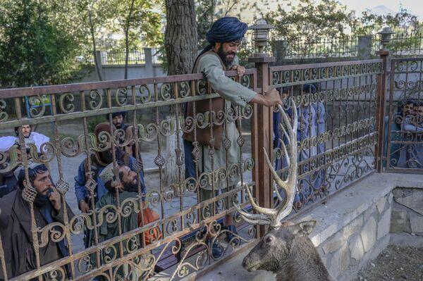 Die Kämpfer der Taliban* im Kabuler Zoo. - SNA
