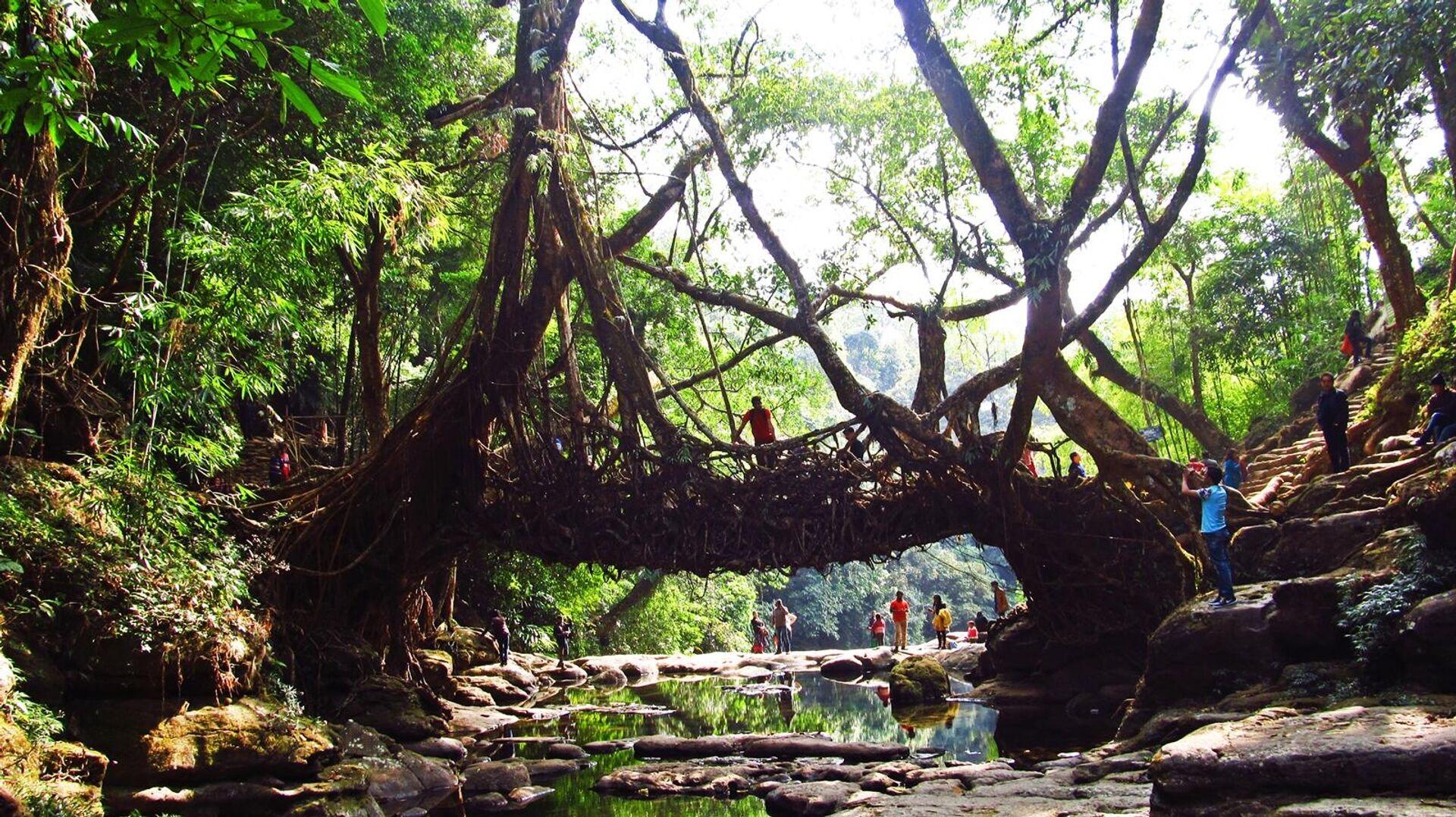 Lebende Brücke in der Umgebung von Meghalaya, Indien - SNA, 1920, 27.09.2021