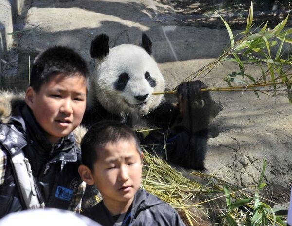 Kinder lassen sich mit Pandabären im Tokioter Zoo Ueno fotografieren. - SNA
