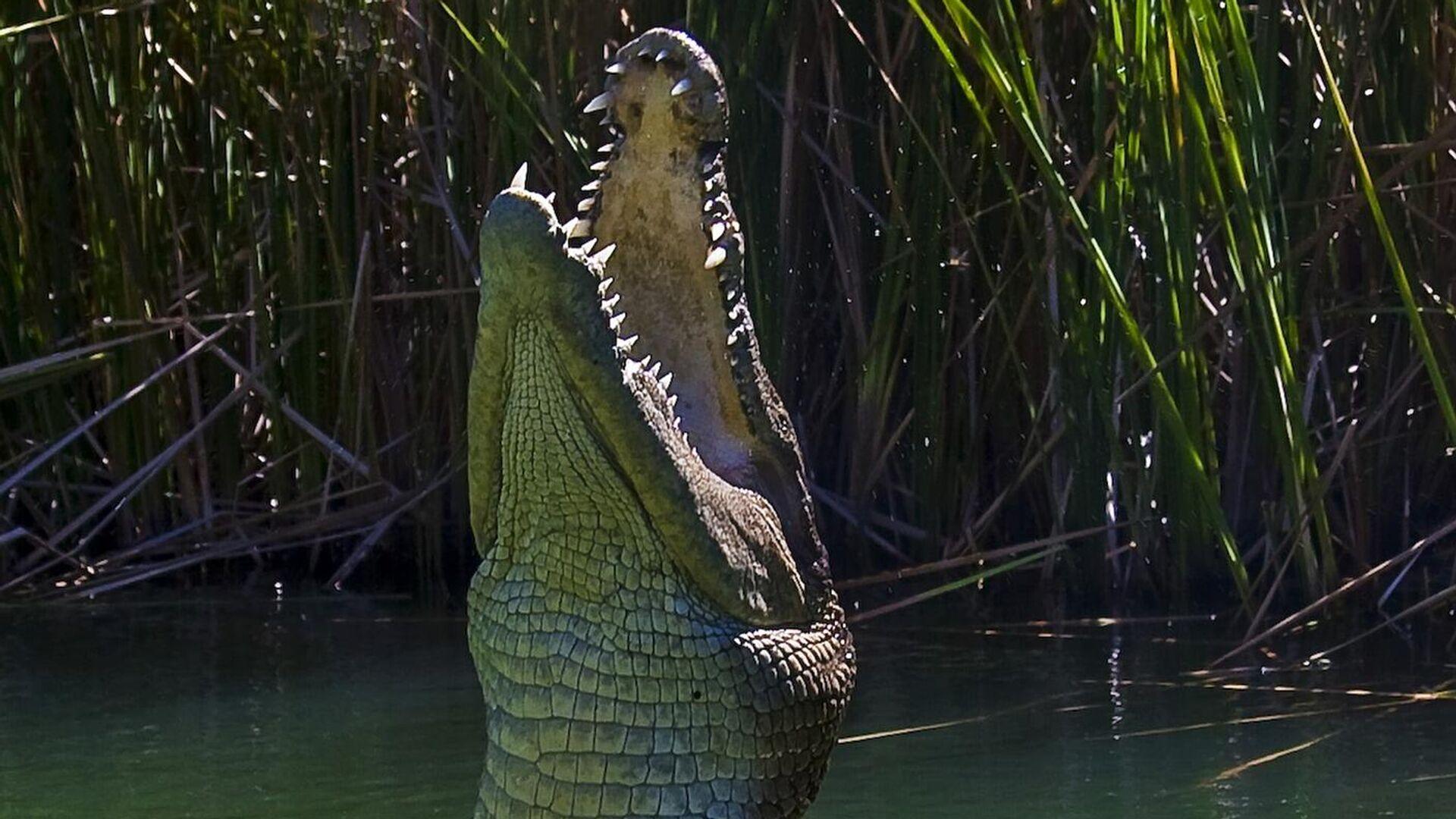 Krokodil. Symbolbild - SNA, 1920, 05.10.2021