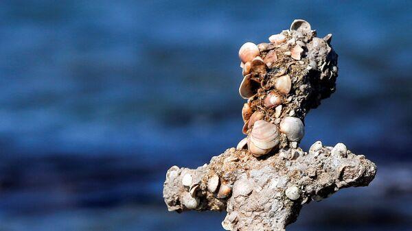 Меч, предположительно принадлежавший крестоносцу, найденный в Средиземном море - SNA